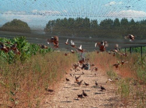 Virus H5N8 : La filière de l'élevage de gibier condamnée à mort par des décisions iniques !