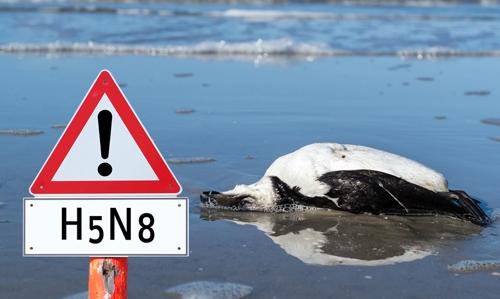 """""""Grippe"""" aviaire : OUI au principe de responsabilité, NON au principe de précaution exagéré !"""